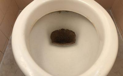 トイレ便器(尿石除去)再生 No.181023