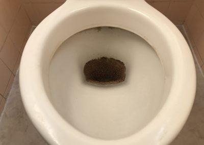 トイレ便器尿石除去クリーニング再生 No.BA181012